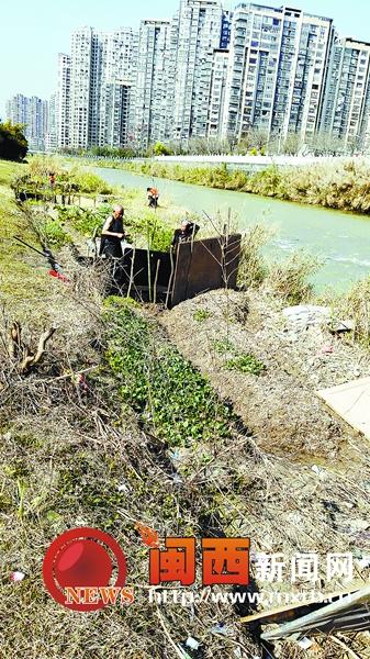 龙岩龙津河小溪河滩涂种菜成规模河道变开心农场
